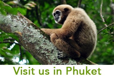 The Gibbon Rehabilitation Project – Rescue . Rehabilitate ...